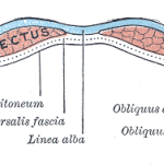 abs cross section.jpg